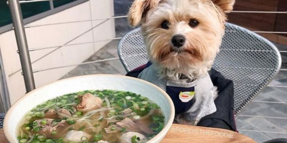 dog eating soup in restaurant