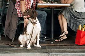 restaurant dog