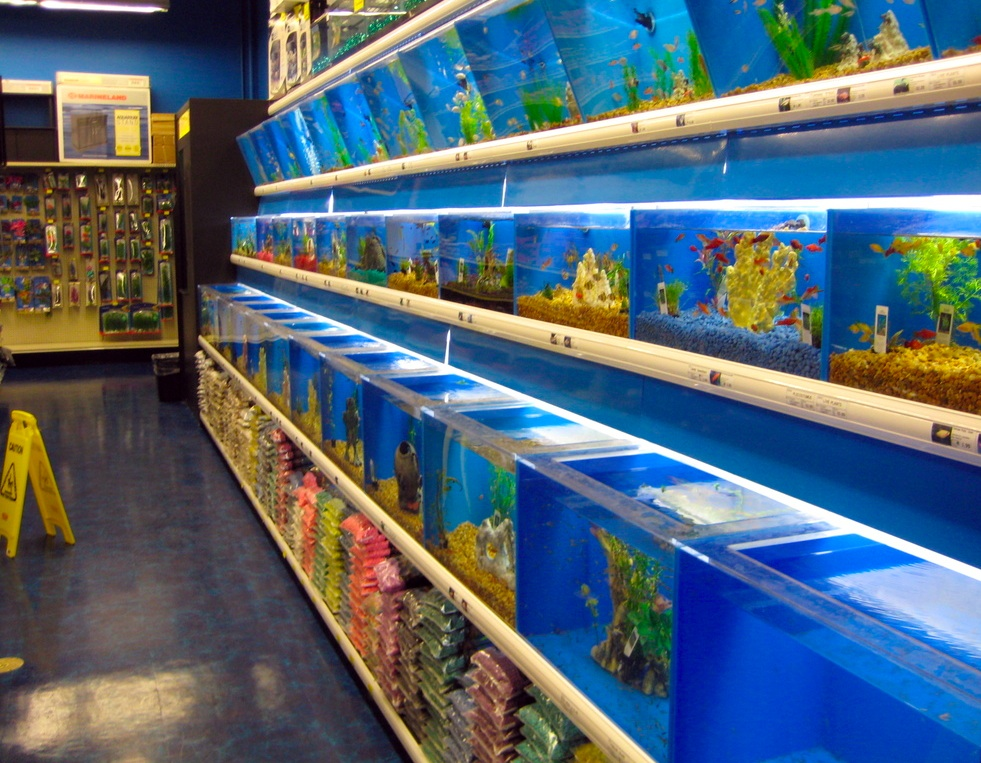 fish in a pet store