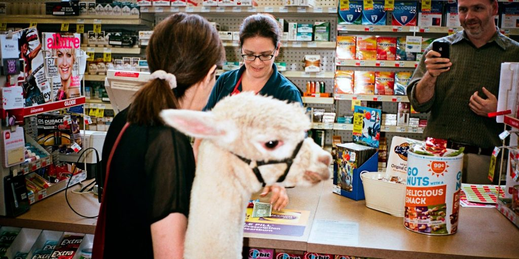 legal issues for pet stores