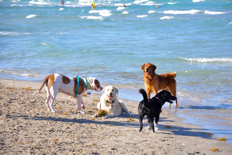 Bark Park Dog Beach in Florida
