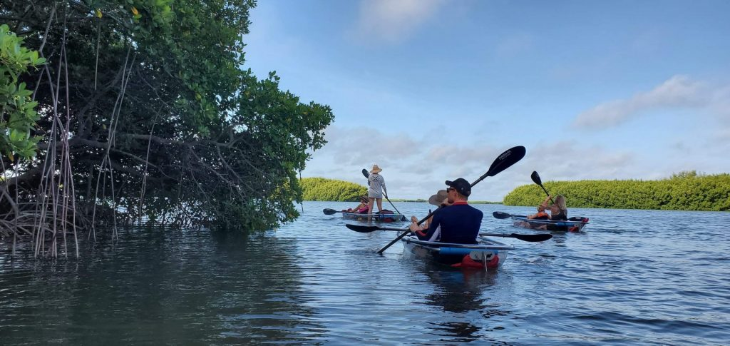Clear Kayak Sunset Tours in Florida