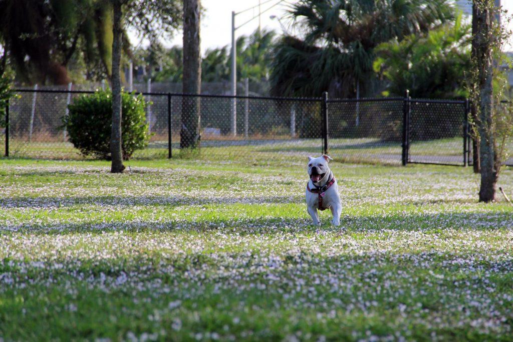 Dreher Dog Park in Florida