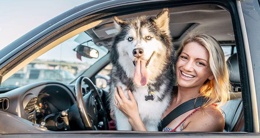 best way for dog transportation