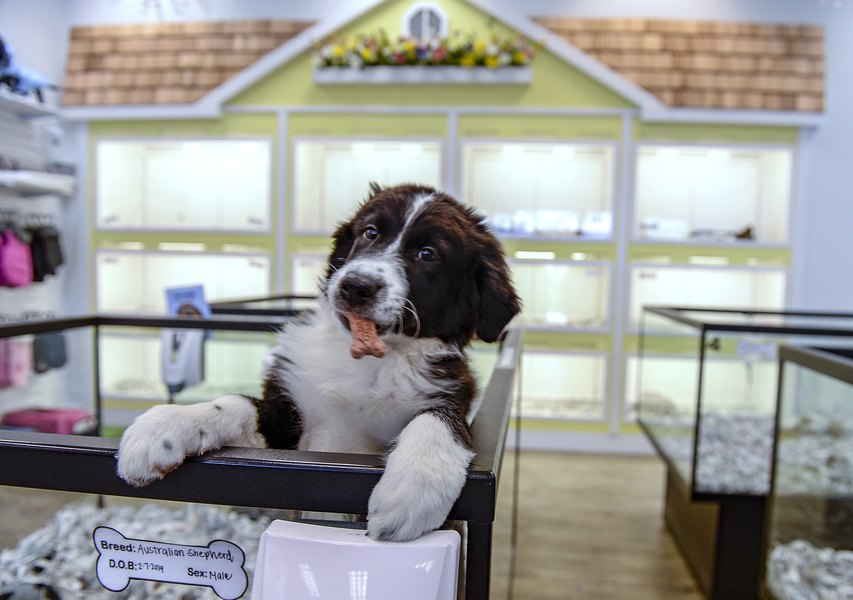 business consultant for pet store