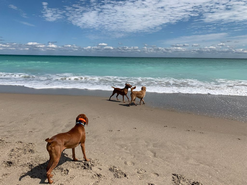 Jupiter Dog Beach, Florida