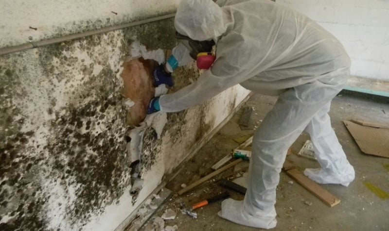 mold abatement services