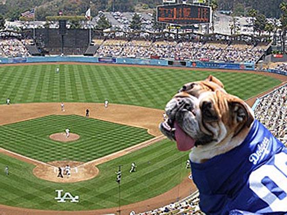 LA Dodger Pet Day