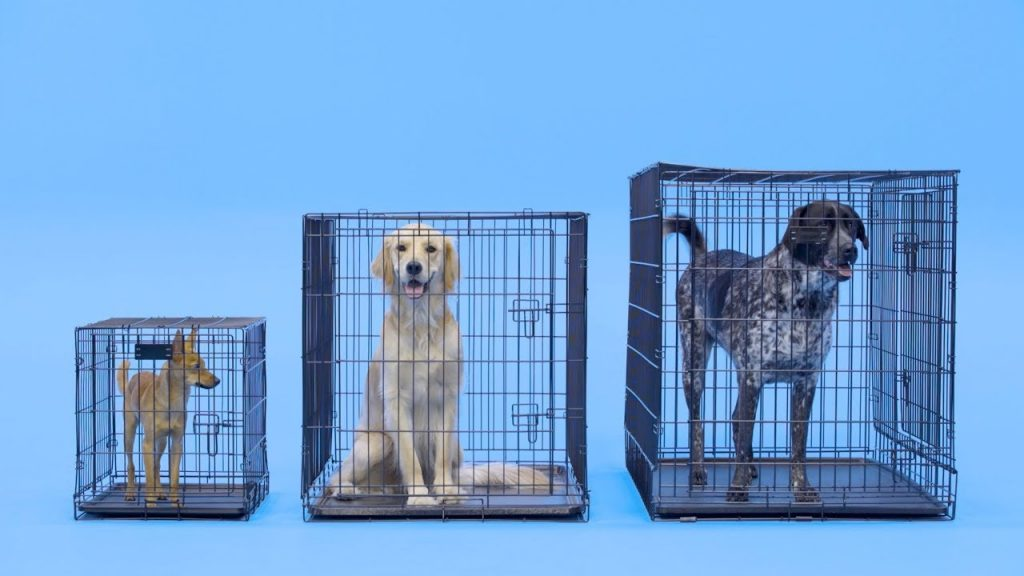 size of dog crates