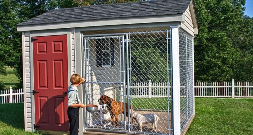 best dog enclosure