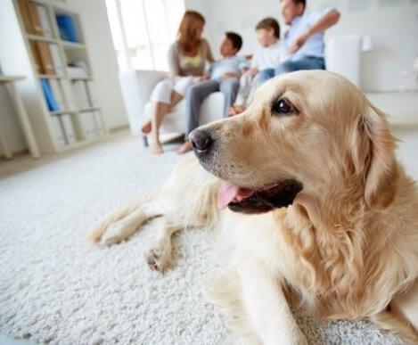 large dog breed safety