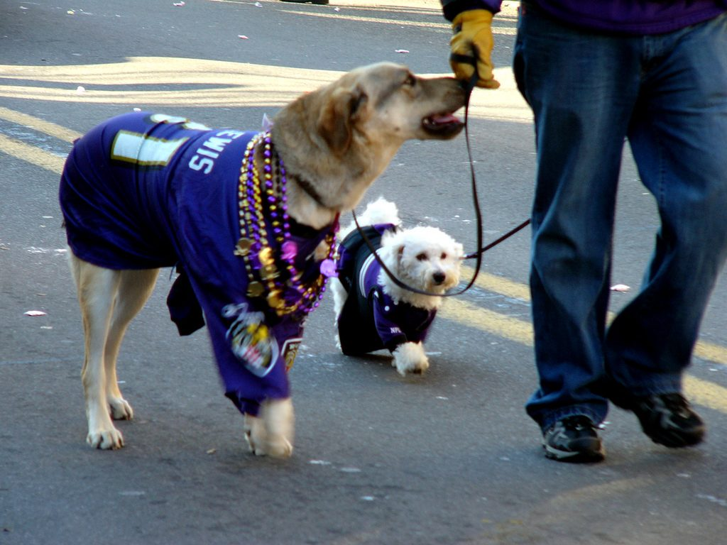 bring your dog to NFL Games