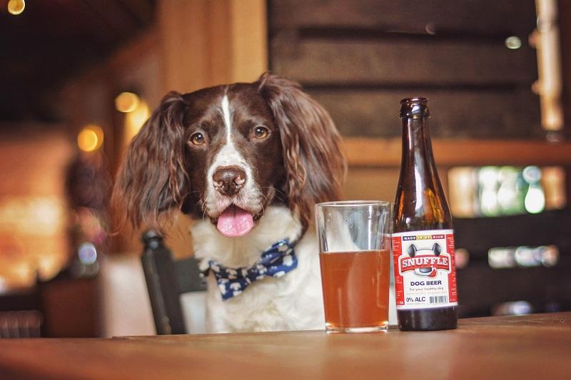 Dog-Friendly Bars in Washington