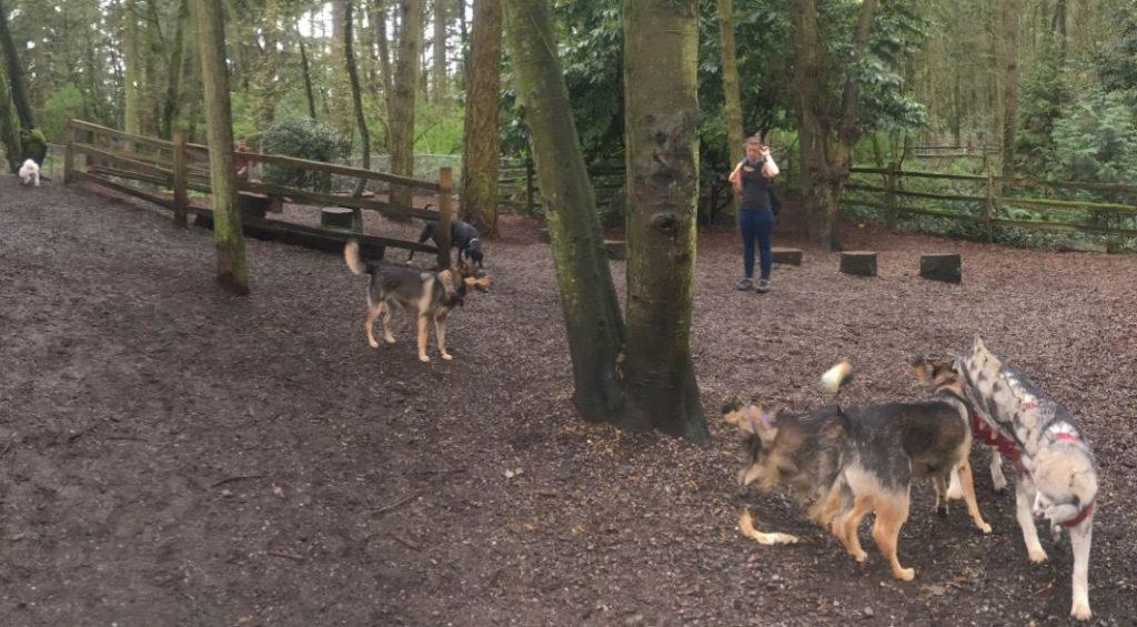 Woodland Off-Leash Dog Park