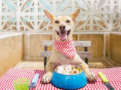 dog eating in restaurant