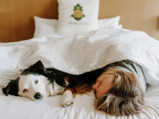dog friendly hotels in Washington