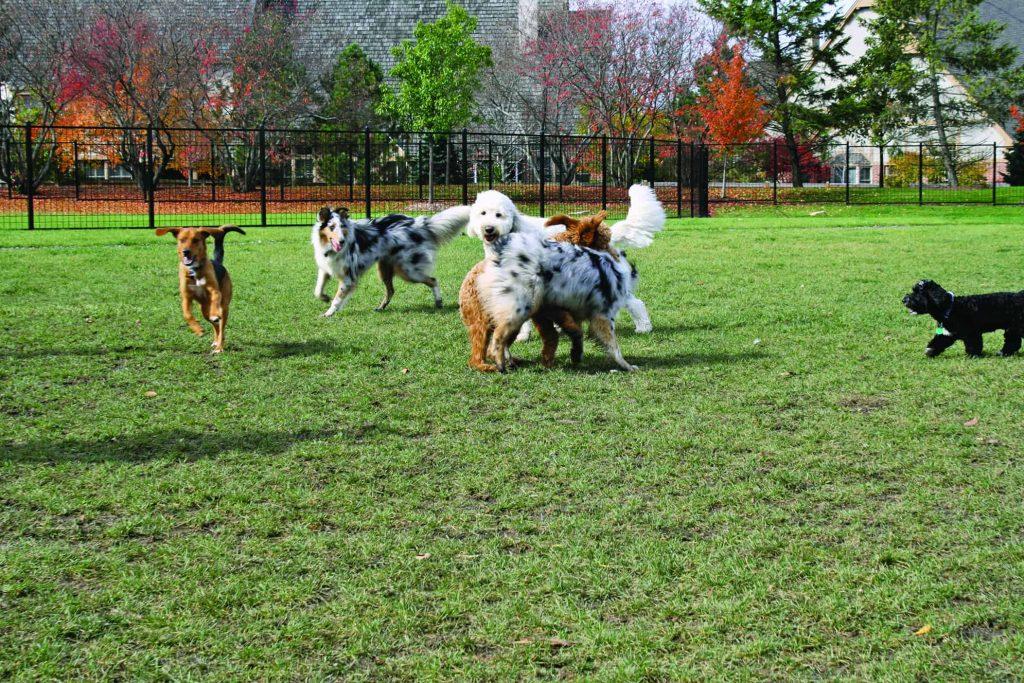 Denver Dog Parks
