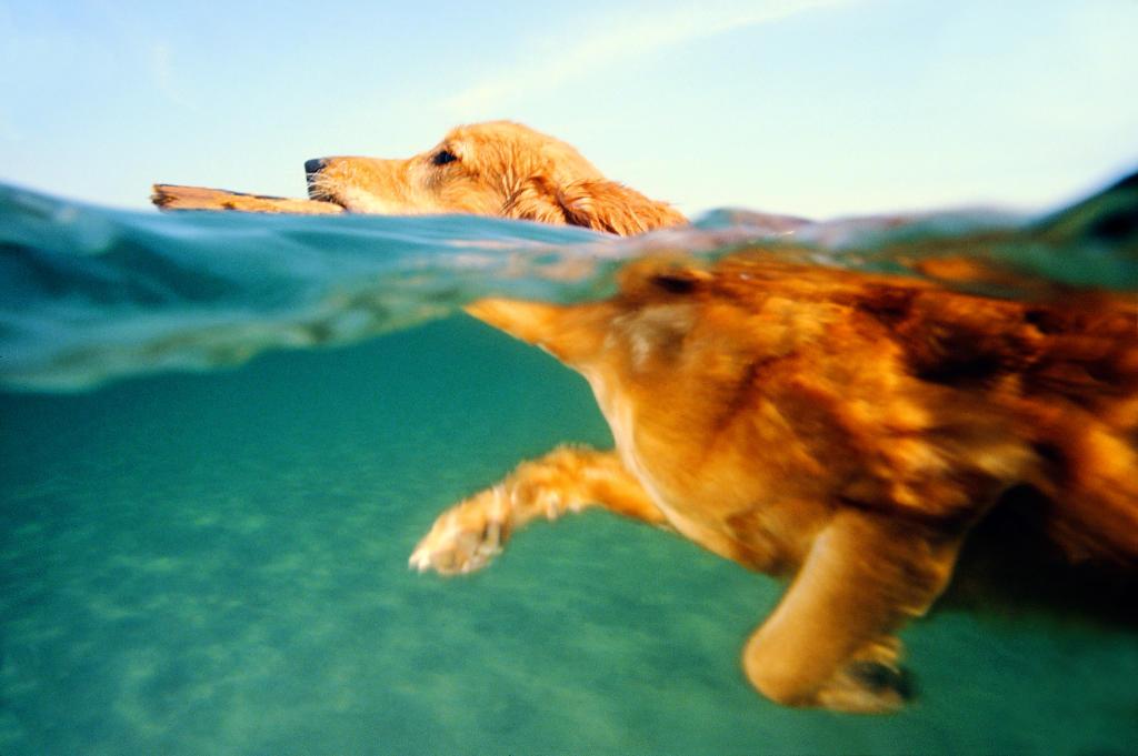 Washington Dog Swimming