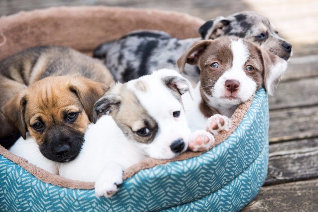 How to Start a Pet Adoption Business