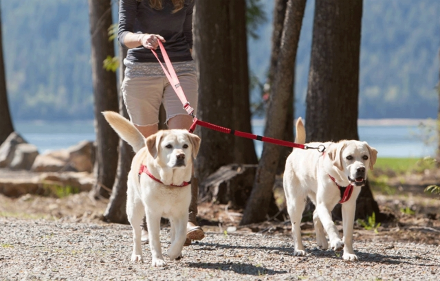 specialty Dog Leashes
